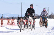 息ぴったり、雪原疾走 八幡平・犬ぞりレース