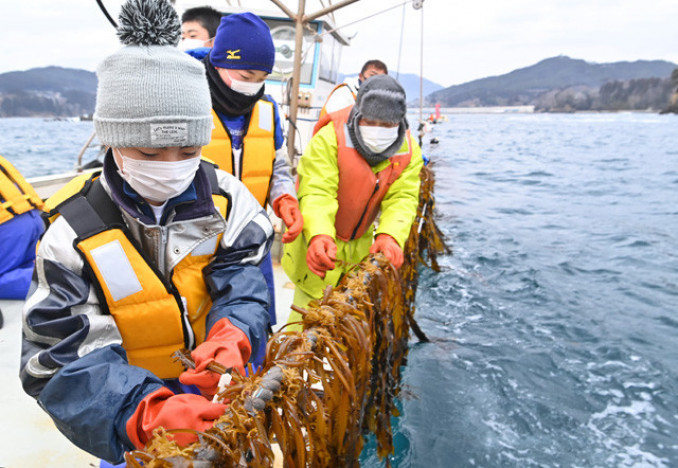 地元漁師に教わり、ワカメを収穫する末崎中の生徒=26日、大船渡市・門之浜湾