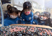 命を育む 心を育てる 宮古市、サケの発眼卵を小学校へ配布