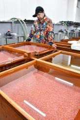 小本浜漁協のさけます人工ふ化場。稚魚の放流数を十分確保できず、将来の漁獲減が危ぶまれる