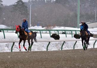春競馬に向けて馬場の感触を確かめる競走馬=10日、盛岡市新庄・盛岡競馬場