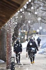 陽光を浴び、屋根から滴り落ちる雪解け水=21日、盛岡市紺屋町(報道部・山本毅撮影)