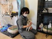 保護猫つなぐ場再開へ 雫石の団体、4カ月ぶり譲渡会