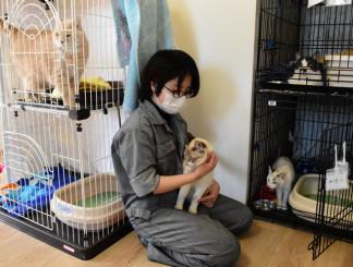 猫の世話をするスタッフ。繁殖期を前に譲渡会を再開する