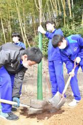 東日本大震災の津波到達点にサクラの卒業記念植樹を行う高田一中の3年生