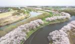 川沿いを染める回廊 福岡堰(茨城・つくばみらい市)