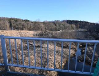 荒廃した高松芝水園内のヨシ原。雑草がたくさん生え野鳥も少なくなった