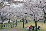 陽気に誘われ春一色 八幡山公園(宇都宮市)