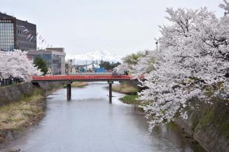内川沿いの桜並木。残雪を頂く鳥海山と朱塗りの三雪橋が風情を感じさせる