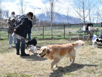 岩手山を望むドッグランで愛犬と遊ぶ来場者