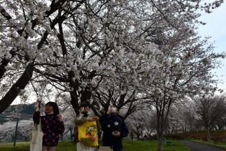 グラウンドを囲むように咲く桜が楽しめる堀野近隣公園