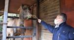 人気者ヒトミ 愛知へ 盛岡市動物公園のヒトコブラクダ