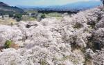 のどかな風景、春一色(秋田・大仙市)