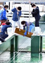 水槽をふさいでいた木枠を外し、閉伊川へと稚魚を放流する鈴木悠平さん(右)と斎藤心太郎さん(右から2人目)