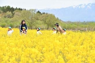 岩手山を背に咲き誇る菜の花畑を歩く子どもたち=7日、雫石町西安庭・町場地区園地(報道部・今西真琴撮影)