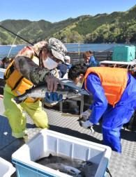 釜石湾内のいけすからすくい上げたサクラマスを手にする関係者