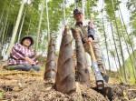 すくすく春の味 住田・タケノコ収穫