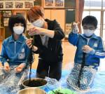 地元水産業に関心高め 大船渡・吉浜小児童、ワカメ芯抜き体験