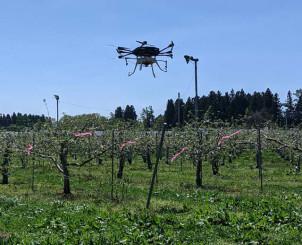 花粉を加えた溶液をリンゴの木の上から散布するドロ-ン(岩手スカイテック提供)