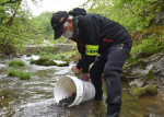ヤマメすくすく育て 盛岡市と県釣り団体協、稚魚8500匹を放流