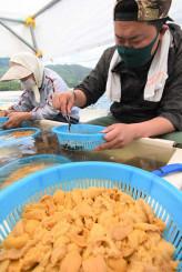 ウニのむき身の選別に励む漁業者