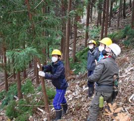 町内の山林で間伐に挑戦する生徒(有住中提供)