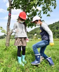 桜の根元に肥料を埋める立花小の児童
