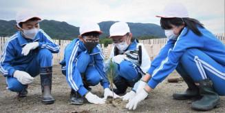 クロマツの苗を植樹する吉浜小の児童