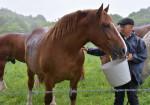 馬事文化継承に懸念 「チャグ馬」分散開催も中止