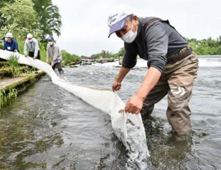 和賀川にアユの稚魚を放流する関係者