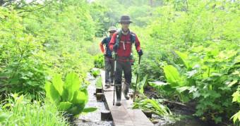 緑に囲まれた道を進む登山客