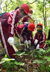 折爪岳で植生調査をする福岡小5年生。ヒメボタルが生息する環境に理解を深めた