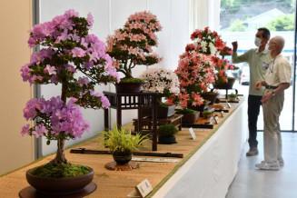 個性豊かなサツキ盆栽が並ぶ会場