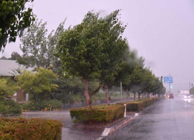 雷鳴が響き、激しい風雨によって揺れる街路樹=15日午後5時47分、奥州市水沢佐倉河