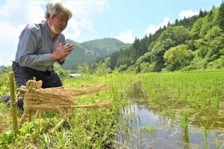 馬の人形を田んぼに供え、豊作や無病息災を祈る男性