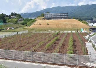 津波浸水域に整備し、開業準備が進む観光果樹園=26日、陸前高田市高田町