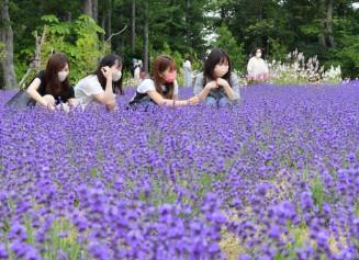 見頃を迎え、園内をあでやかな紫色に染めるラベンダー=4日、岩手町五日市