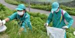 守る 八幡平の景観美 松尾中の生徒ら外来植物を駆除