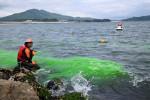 離岸流調査、遊泳支障なし 高田松原で海開き前に安全確認
