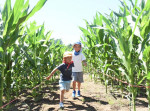 きみを待つ巨大迷路 トウモロコシ畑に整備、24日オープン