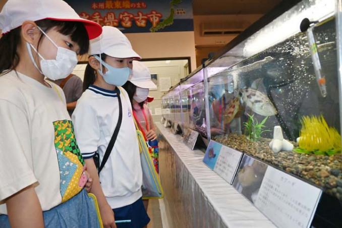魚など磯の生物の展示に見入る鍬ケ崎小の児童