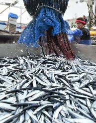 大船渡市魚市場に今季初水揚げされたサンマ=28日、同市大船渡町