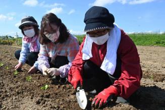「大きく育って」と声を掛けて苗を植える参加者