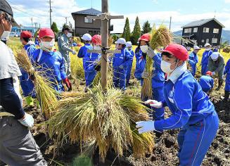 刈り取った稲をくいに掛ける前沢小の児童