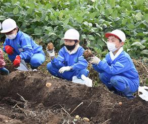ジャガイモの収穫を体験する一方井小の3年生