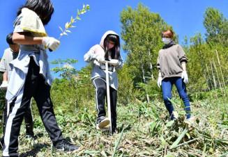 穴を掘り、ドロノキの苗木を植える参加者