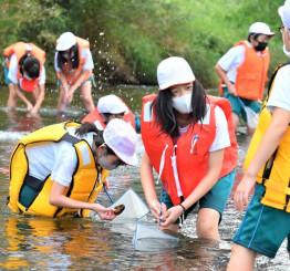 川底の石を拾い、付着した水生生物を観察する杜陵小の児童