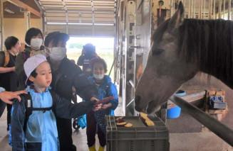 馬に餌を与える前沢明峰支援学校小学部の児童ら