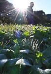 降り立つ冬、迎える光 盛岡で初霜、本州今季初