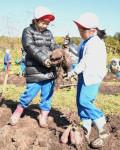 イモ、落花生ざくざく 洋野・向田小が収穫体験